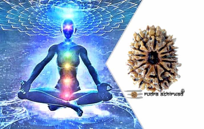 13 Mukhi Rudraksha - Amazing Benefits - Rudra Ashirwad